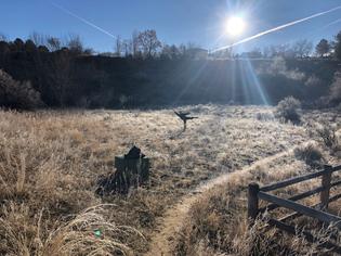 Sun V swan field