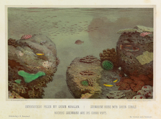Lithograph of underwater scene by Eugen Ransonnet-Villez, from colour pencil drawings made by the artist while submerged in his diving bell, from his 1867 Sketches of the Inhabitants, Animal Life and Vegetation in the Lowlands and High Mountains of Ceylon. SIMONWEBERUNGER~COMMONSWIKI/PUBLIC DOMAIN