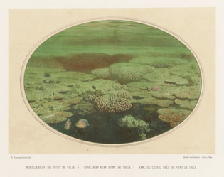 Lithograph of underwater scene by Eugen Ransonnet-Villez, from colour pencil drawings made by the artist while submerged in his diving bell, from his 1867 Sketches of the Inhabitants, Animal Life and Vegetation in the Lowlands and High Mountains of Ceylon. BIODIVERSITY HERITAGE LIBRARY/PUBLIC DOMAIN