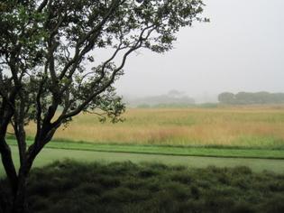 sagaponack-garden-norman-jaffe-laguardia-mist-meadow-grasses-gardenista-e1457397286206.jpg