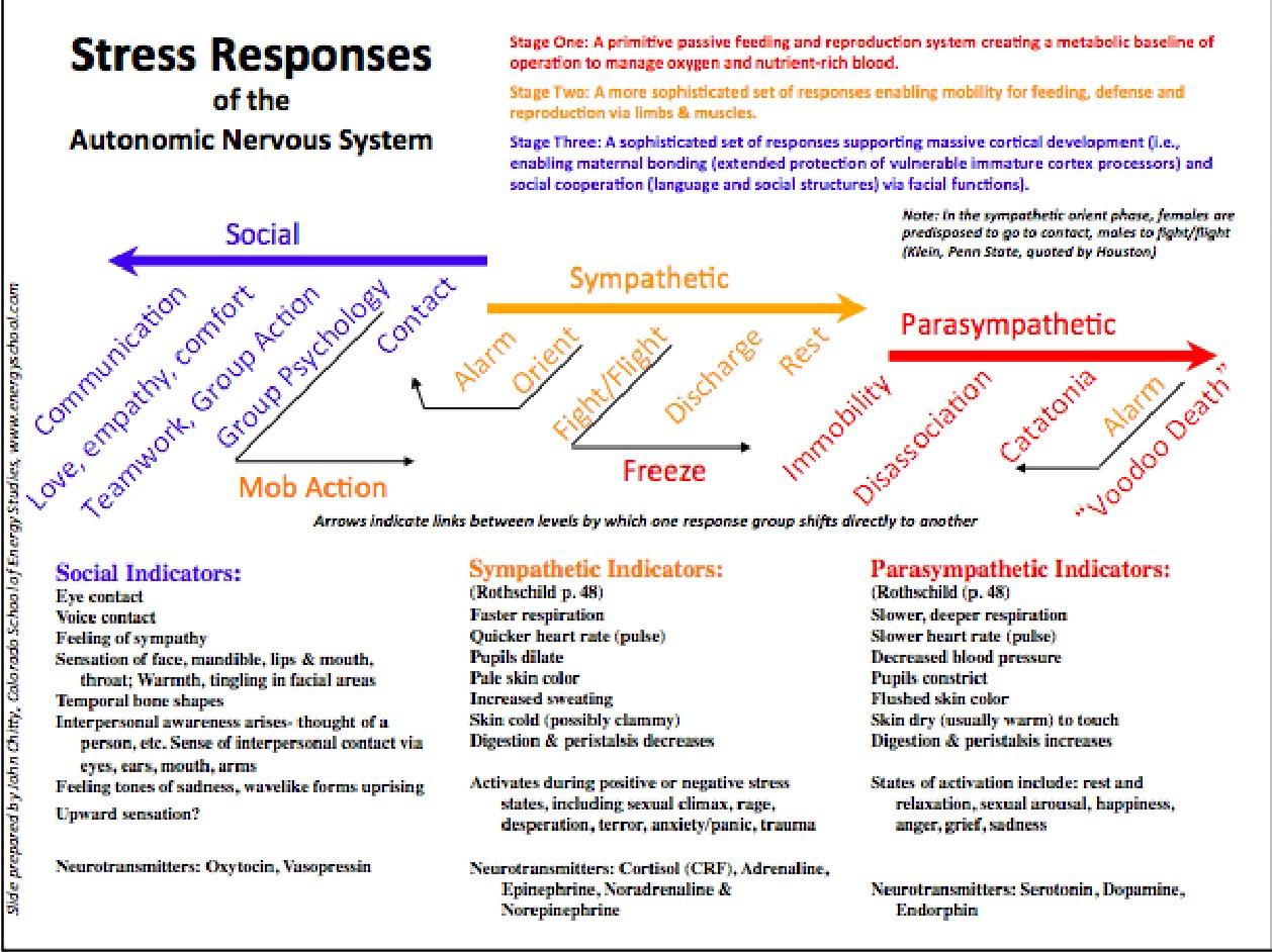 Stress Responses of the Autonomic Nervous System