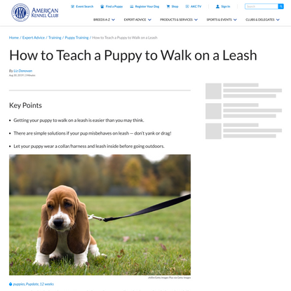 Leash Train Your Puppy In 5 Easy Steps