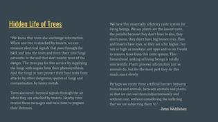 """""""Hidden Life of Trees"""""""