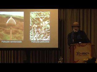 The Treasure Called the Psilocybes: Paul Stamets