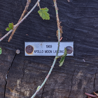 Tree Ring Tags, UC Berkeley