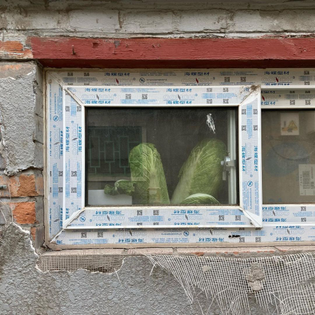 Beijing window and cabbage