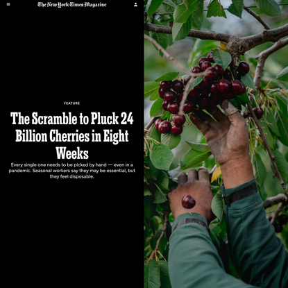 The Scramble to Pluck 24 Billion Cherries in Eight Weeks