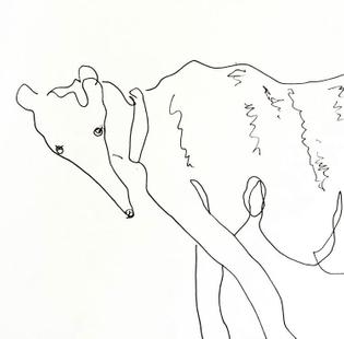ezra the dog