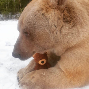 bear:bear