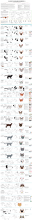 guide to housecat breeds by majnouna