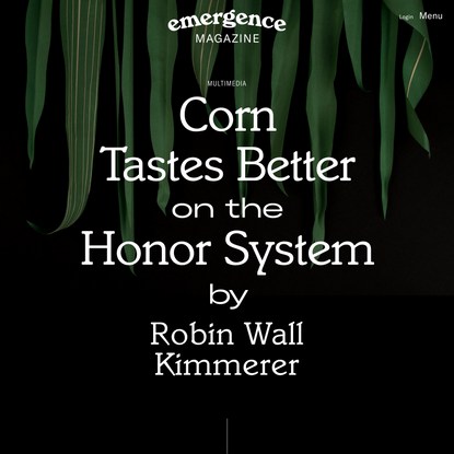 Corn Tastes Better on the Honor System — Robin Wall Kimmerer