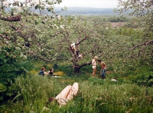 orchard-by-justine-kurland-on-artnet-auctions.jpg