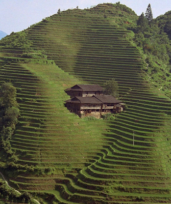 "Steffan's Instagram post: ""Longi Rice Terrace, China. Via @somewhereiwouldliketolive #longiriceterraces #rice #nature #pastu..."