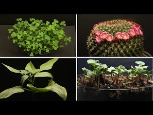 26 Minutes of Plants Growing Time Lapse Compilation! LoFi Music Relax