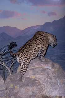 adam-powell-upper-west-side-safari-photograph.width-1440_8zczb4qkjhxppkn5.jpg