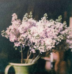 francois-halard_flowers.jpg