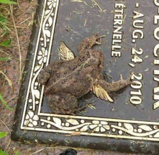 Not a frog, an angel