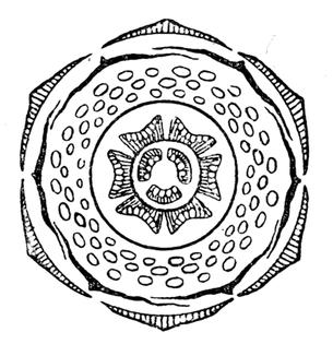 punica_granatum_flowerdiagram.png
