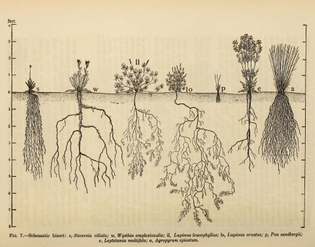 ecological_relationship_of_roots_01.jpg