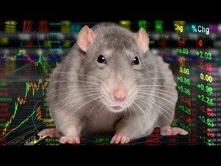 MY PET RATS PREDICT THE STOCK MARKET