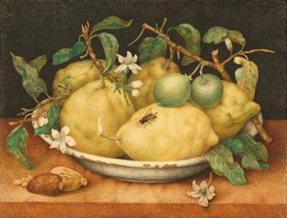 giovanna_garzoni-still_life_with_bowl_of_citrons-1640-trivium-art-history-1.jpg