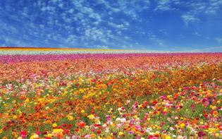 flower-juxta.jpg