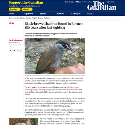 Black-browed babbler found in Borneo 180 years after last sighting