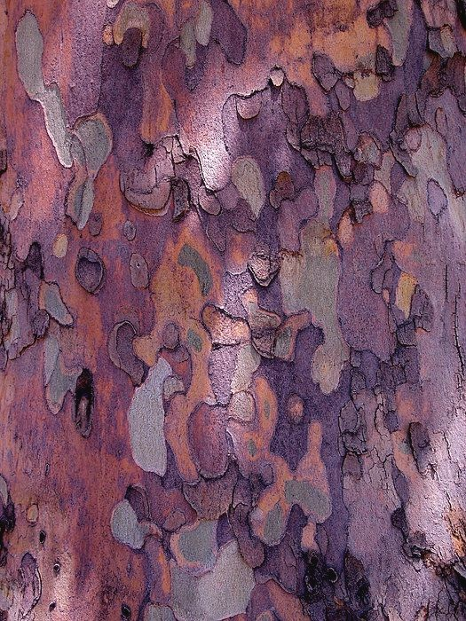 tree bark (or multilayered ceramic glaze or topography or a textile)