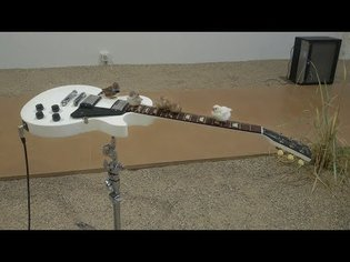Birds on guitars - Céleste Boursier-Mougenot installation, Denmark 2017