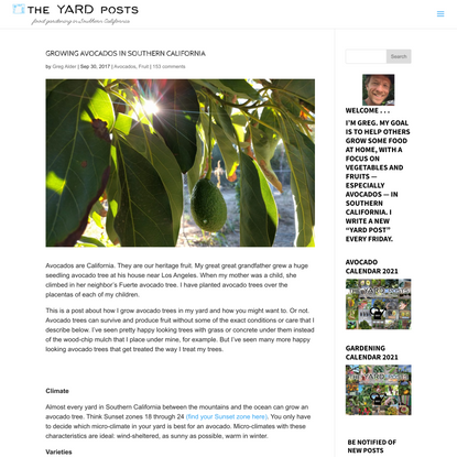 Growing avocados in Southern California - Greg Alder's Yard Posts: Food Gardening in Southern California