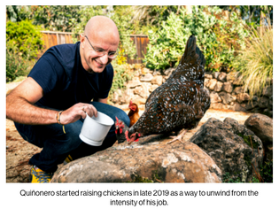 quinonero started raising chickens in late 2019 as a way to unwind from the intensity of his job