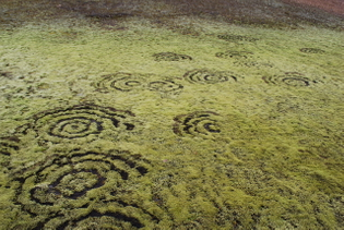 fairy rings in moss, iceland