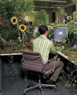 Computer Garden