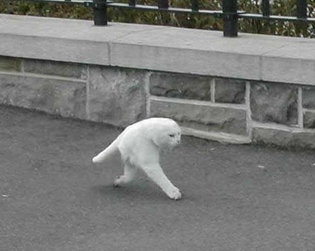 """The Halfcat (via The New Aesthetic) """"Someone saw the halfcat, snapped it, but the route back is lost. The databases contain such..."""