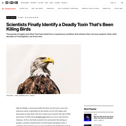 Scientists Finally Identify a Deadly Toxin That's Been Killing Birds