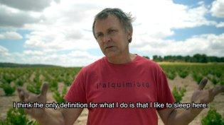 My Dearest Vineyard #2 - ERIK ROSDAHL