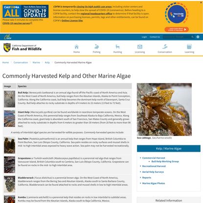 Commonly Harvested Kelp and Other Marine Algae