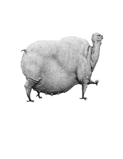 bestiary-of-improbable-animals-by-mateo-pizarro-08.jpg