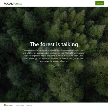 AI helps bring forests into focus | Microsoft In Culture