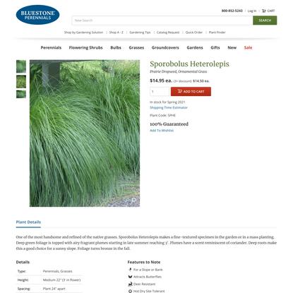 Sporobolus Heterolepis -- Bluestone Perennials