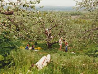 Justine Kurland - Orchard, 1999