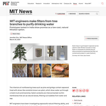 MIT engineers make filters from tree branches to purify drinking water