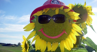 king-sized-sunflowers-large.jpg