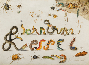 jan_van_kessel_i_-_garden_and_house_spiders_with_grass_snakes_and_caterpillars_contorted_and_entwined_to_spell_the_artists_n...