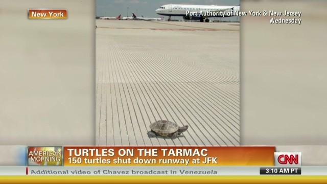 150 turtles shut down runway at JFK