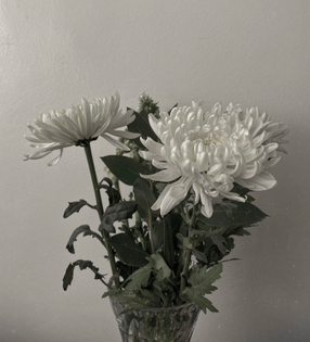 first chrysanthemums