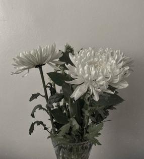 first chrysanthemums