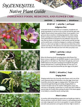ŚW̱,ȻENEṈITEL Indigenous Foods Initiative Native Plant Guide