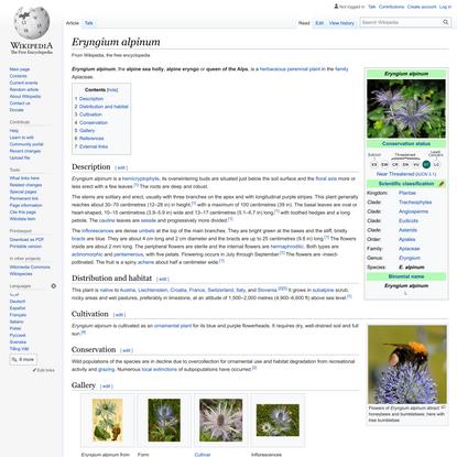 Eryngium alpinum - Wikipedia