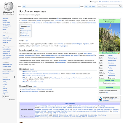 Saccharum ravennae - Wikipedia